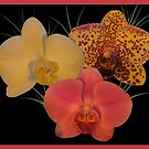 Orchid Dream by orko
