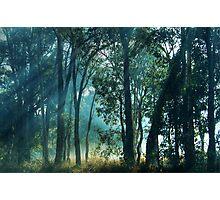 Sunbeams Photographic Print
