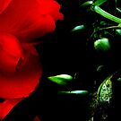 Red Flower, Green Leaves by LydiaWoods