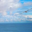 Seagull, above the sea by LydiaWoods