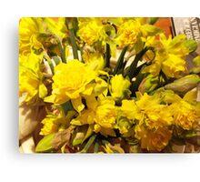 ...it's almost Spring! daffodils..2000 VISUALIZZAZ. GIUGNO  2013-VETRINA RB EXPLORE 17 MARZO 2012 ---- Canvas Print