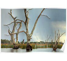 Tendrels - Lake Fyans The Grampians Poster