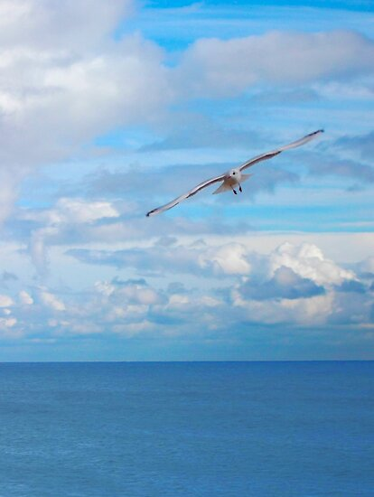 Seagull, above the sea, portrait by LydiaWoods