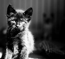 Black Kitten by CopperCat