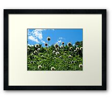 Fuzzy Pom Pom Flowers on a Grassy Hilly Slope on a Summer Day  Framed Print