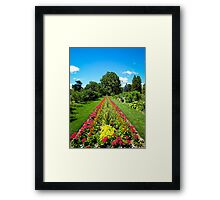 Straight Lines ~ Pink Geranium Flowers, Dracaenas & Perennials under a Blue Sky Framed Print