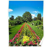Straight Lines ~ Pink Geranium Flowers, Dracaenas & Perennials under a Blue Sky Poster