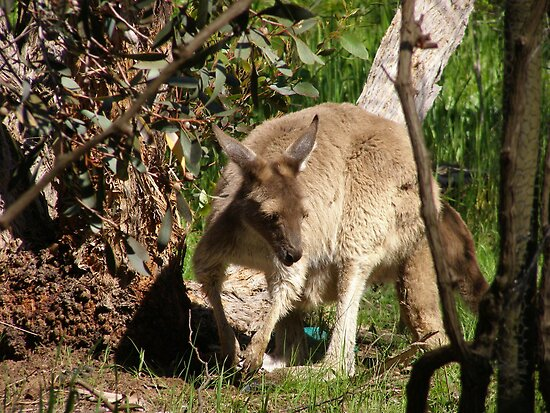 I'll Sneak away whilst mums not looking. Joey, back patio.S.Aust. by Rita Blom