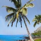 Coconut Palm Tree by Ticker