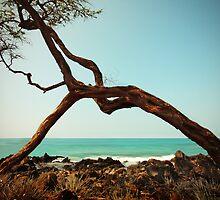 Frame in Frame by Ticker