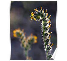 Caterpillar Blossum Poster