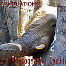 Nature-Elephant -NP challenge by NIKULETSH