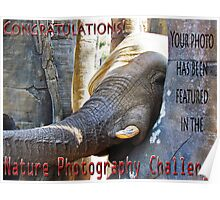 Nature-Elephant -NP challenge Poster