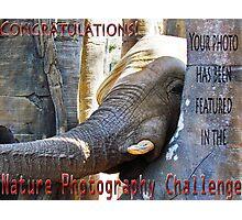 Nature-Elephant -NP challenge Photographic Print