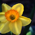 Yellow flower by Bethany Thomas
