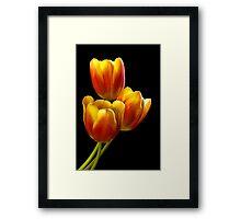 Tulip Trio - Heat Wave Framed Print