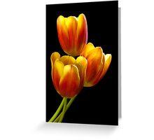 Tulip Trio - Heat Wave Greeting Card