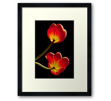 Tulips Glow Framed Print