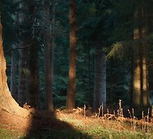 New Forest Late Afternoon by Highstick