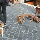 The Dog Walker's Pack by joycee