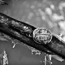 Tiny turtle by Sid Paleri