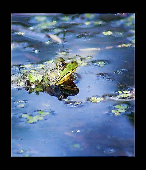 FROGGY by vince dwyer