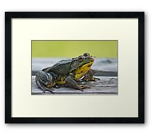 Ok where is lunch  Framed Print