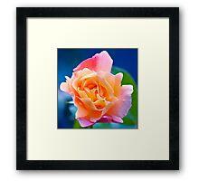 A final summer bloom. Framed Print
