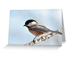 Chickadee and blue sky Greeting Card