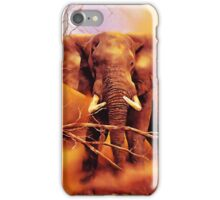 The African bush elephant (Loxodonta africana) iPhone Case/Skin