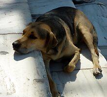 Athenian Dog at the Agora by James Stratford