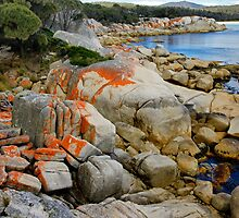Bay of Fires IV by Harry Oldmeadow
