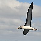 Albatross on Stewart Island NZ by Bryan Cossart