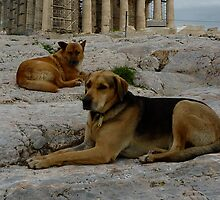 Acropolis dogs by James Stratford