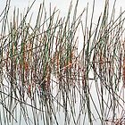Amongst the Reeds by Anthony Woolley