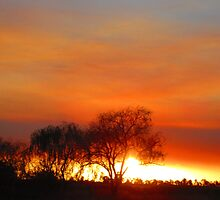 Bush Fire. by Mark B Williams