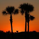 Florida Sunrise by Jim Cumming