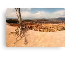 Bryce Canyon Survivor Canvas Print
