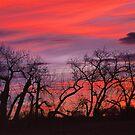Sky Dance by nikongreg