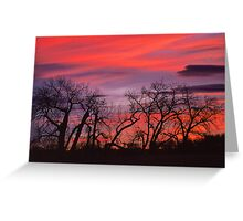 Sky Dance Greeting Card