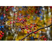 Fall Fruits  Photographic Print
