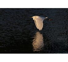 Snow over Water - Snowy Egret Photographic Print