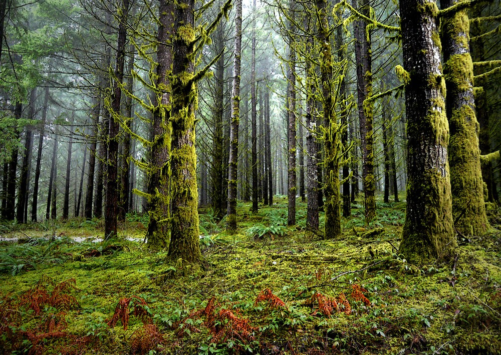 In The Open by Charles & Patricia   Harkins ~ Picture Oregon
