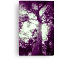 Tree Thru A Lens Canvas Print
