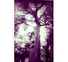 Tree Thru A Lens Photographic Print