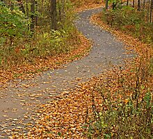 Fall Follow-Up by Monnie Ryan