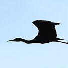 Silhouette - Little Blue Heron by Jim Cumming