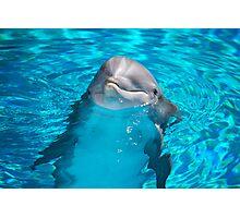 New Baby Dolphin Photographic Print