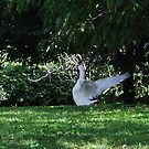 Be Free, The Lone Goose 2009 by ArleneMartine
