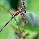 Spreadwing by Ann  Palframan